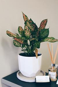 desk plant edited
